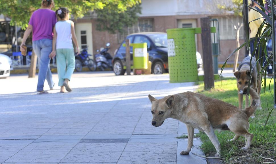 Los que se salvaron. Ayer a la tarde se veían algunos perros en Deán Funes y pocos chicos en las calles (Sergio Cejas).