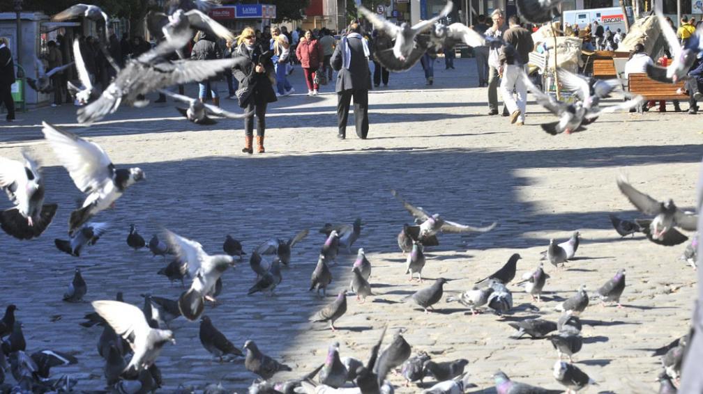 En la plaza. La gente les da de comer a las aves aunque éstas representen un foco infeccioso y dañen el patrimonio histórico (La Voz / Raimundo Viñuelas).
