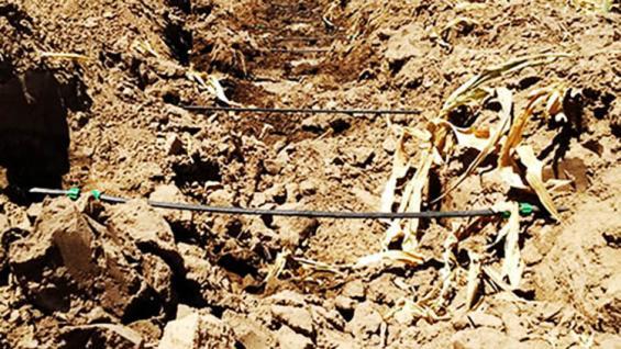 Goteo. El riego subterráneo ya es una realidad en Argentina. (Agrovoz)