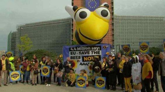 ADHESIÓN. Grupos defensores de las abejas se pronunciaron en favor de la medida europea (Foto Web)