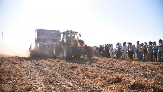 A CAMPO. Las dinámicas de cosecha fueron parte del Octavo Circuito del Maní realizado en General Cabrera y que reunió a toda la cadena del cultivo (Prensa Circuito del Maní)