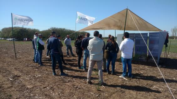 JORNADA. Las regionales de Alta Gracia, Monte Cristo y Río Segundo de Aapresid, mostraron su año de trabajo en el Campo Escuela de la FCA-UNC. (LA VOZ)