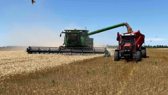 IMPULSO. El trigo es protagonista de la mejora en las expectativas: la cosecha finalizó con muy buenos indicadores y los precios subieron con fuerza en las últimas semanas. (LA VOZ/Archivo)