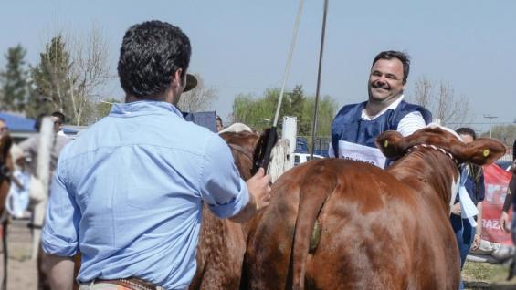 DISTINCIÓN. Alejandro Lauret recibe del jurado el premio a la reservada gran campeón Braford. (LA DOMINGA)