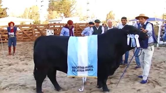 GRAN CAMPEÓN. Walter Orodá, titular de la cabaña El Porvenir, recibió el premio al mejor toro en la Rural de Jesús María. (CANAL GANADERO)
