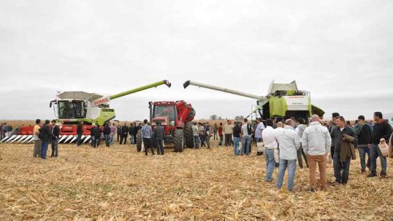 Experiencia de Cosecha en Oncativo, con la participación de cosechadoras Claas y cabezales Mainero y Allochis.