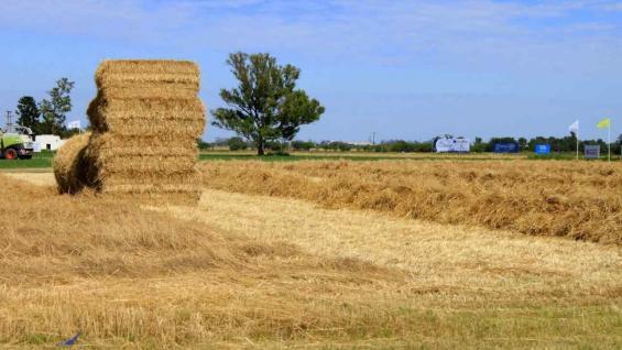 PROTEÍNA. La confección de un forraje de alfalfa de buena calidad será tema de la Experiencia Forrajera que Claas realizará en 7 de diciembre en Sunchales (MARCELO HOYOS)