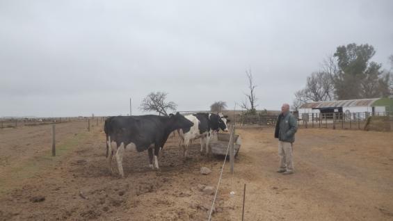 PUROS DE PEDIGRÍ. La cabaña cuenta con más de 600 animales puros registrados de la raza Holando Argentino. (LA VOZ)
