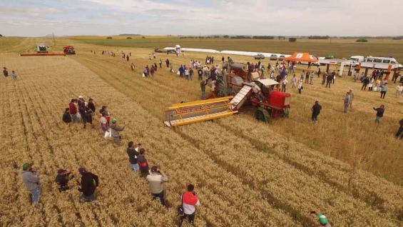 Demostración. La cosechadora santafesina participó de la jornada junto con una Lexión 780 (Foto Claas)