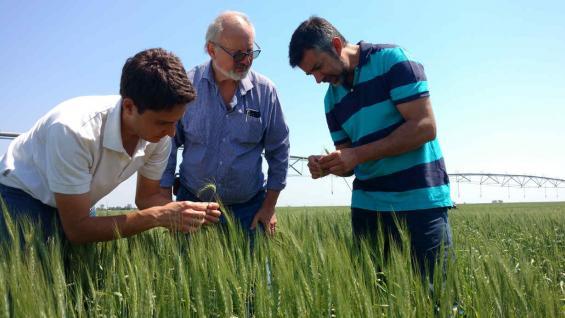 TRIGO BAJO RIEGO. Hulse, al centro, junto con los asesores Esteban Marinsalda y Pablo Gusolfino. Más de la mitad del campo está bajo riego suplementario. Allí, todas las campañas garantizan una rotación completa de trigo, soja y maíz (LA VOZ)