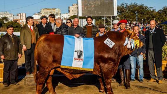 PRIMERO. El gran campeón macho Brangus en Palermo 2019, de Nantex  y Juan Debernardi. (Fotos Daniel Sempé)