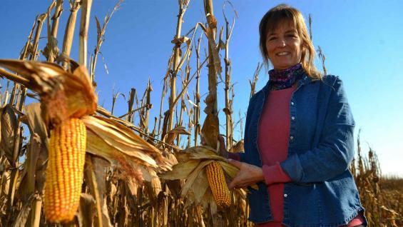 MANOS A LA OBRA. Arnaldo, en el campo que cultiva con su familia en las afueras de Monte Cristo, en un lote de maíz que rindió entre 90 y 100 quintales por hectárea. (Nicolás Bravo / LA VOZ)