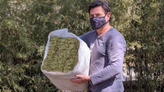 MINI. Los fardos que elaboran en Alfasud tienen la mitad del tamaño del formato tradicional. (Gentileza Alfasud)