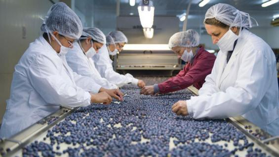(Secretaría de Gobierno de Agroindustria del Ministerio de Producción y Trabajo)