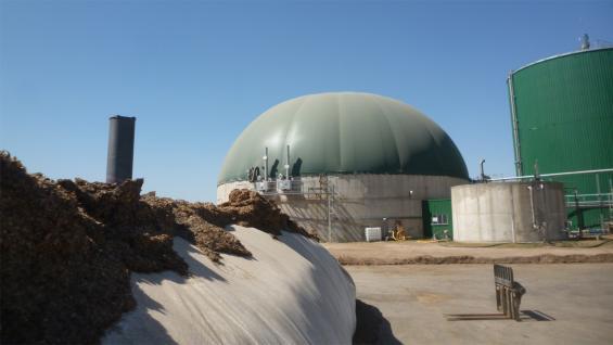 SILO DE MAÍZ. El forraje alimenta los biodigestores para hacer electricidad. (LA VOZ)