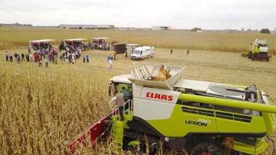 La cosechadora Lexion 780 avanza sobre el lote de maíz, y al fondo una pantalla gigante muestra los datos. (Prensa Claas)