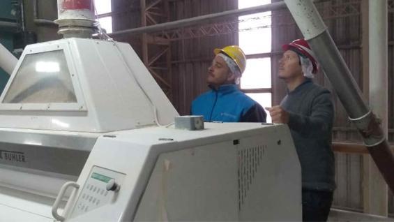 CONTROLES. El Gobierno acentúa la fiscalización en molinos harineros. (Ministerio de Agricultura y Ganadería)
