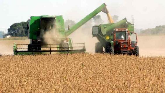 BIEN ESCASO. La soja se revaloriza en relación a los otros productos agropecuarios.