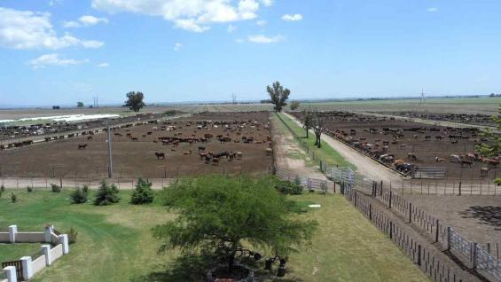 ENGORDE. En Almafuerte, Ricardo Gaido tiene un feedlot con capacidad para 10 mil animales. (Gentileza La Merced SRL)
