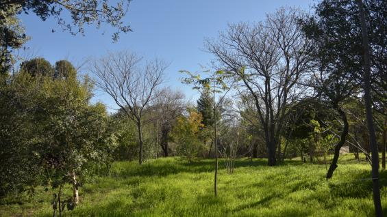 PLAN AGROFORESTAL. Como mínimo, el 2% de cada campo deberá tener árboles.