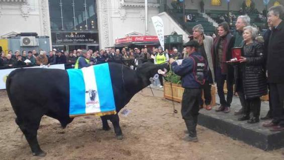 GRAN CAMPEÓN. El toro de Corral de Guardia premiado en Palermo (Agrovoz)