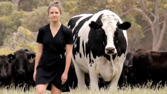 KNICKER. El novillo gigante australiano. (ABC News Australia)