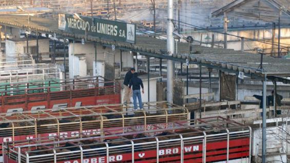 TRASLADO. La operatoria comercial del mercado concentrador se mudurá de Mataderos a Cañuelas. (LA VOZ)