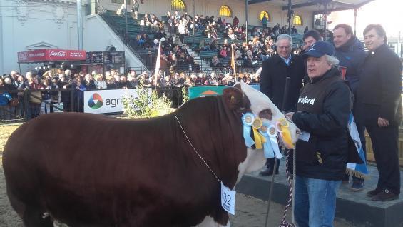 GRAN CAMPEÖN: El toro de 18 meses de La Dominga, el mejor entre los Braford de Palermo 2018 (LA VOZ)