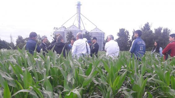 DE PRIMERA. Iván Lubatti, en un lote de maíz temprano, les explica a los productores colombianos las características de su modelo. (LA VOZ)