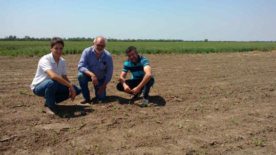 ROTACIÓN. Hulse y sus asesores, en un lote donde ya está creciendo el maíz sobre rastrojos de trigo-soja. Atrás, los lotes pintados de verde con el trigo (LA VOZ)