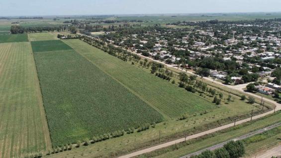 """SUPERFICIE. El módulo abarca 16 hectáreas; la mitad, ocupada por cultivos. El planteo agrícola supone una rotación intensiva en la que los suelos nunca están """"desnudos"""". (Gentileza Melisa Defagot)"""