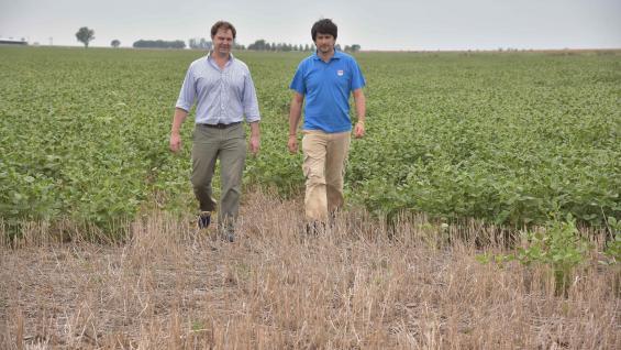 PANORAMA. Martín Pavani y Pablo Bollatti recorren un lote de soja sobre trigo que entre enero y febrero recibió sólo 50 milímetros (Javier Cortez)