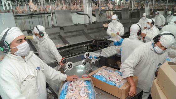 POLLOS. El año pasado, Argentina superó las 200 mil toneladas de carne aviar exportadas (Prensa Agroindustria)