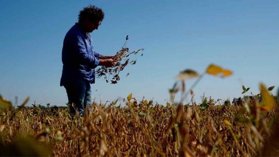 PRODUCTOR. Jorge Josifovich, el productor de Pergamino afectado por la sequía (AP)