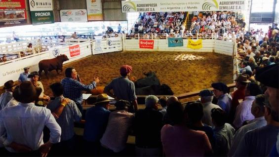 A SALÓN LLENO. Los remates ganaderos, con alta audiencia en la Rural de Jesús María. (Prensa SRJM)