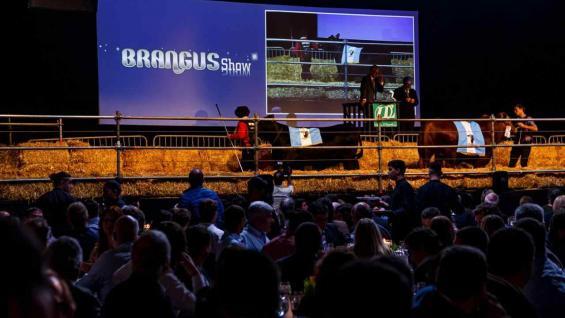 BRANGUS. El remate de elite de la raza facturó 19 millones de pesos. (Daniel Sempé)Foto