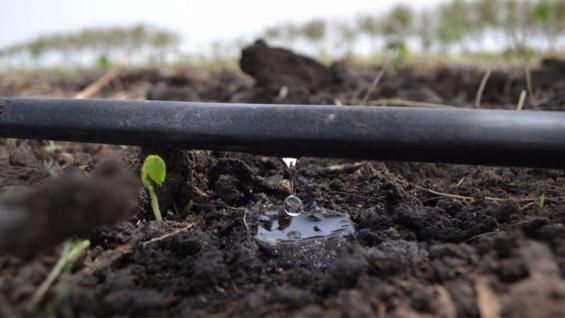 RIEGO. Los sistemas por goteo enterrado, también son muy utilizados.
