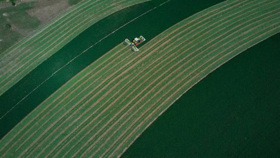 SEGADORA. La máquina de Claas que hizo récord mundial. (Prensa Claas)