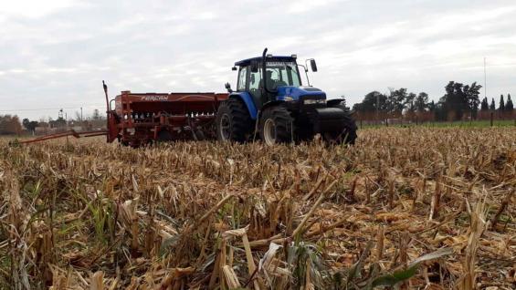 EN CONTINUADO. Apenas 48 horas después de cosechado el maíz, ingresó al lote la sembradora del trigo que se utilizará como cobertura, sobre la cual se implantará soja. (Gentileza Melisa Defagot)