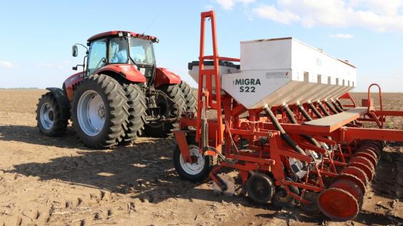 EN MARCHA. La siembra de maní comenzó hace un mes y ya tiene un avance de más del 70% en Córdoba, según la Bolsa de Cereales provincial. (Gentileza Cotagro)