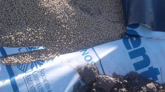 VANDALISMO. El silo bolsa roto con los granos de soja, en La Posta. (Gentileza SRJM)