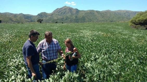 VALLE PRODUCTIVO. Juan Climenti, Alejandro Conci y Emilia Funes evalúan el desarrollo de una soja sembrada en noviembre, con el Pan de Azúcar de fondo. (LA VOZ)