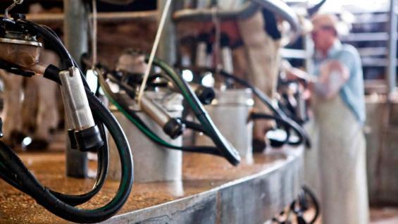 ORDEÑE. Pese al contexto crítico, en el primer bimestre la producción de leche creció 5,1 por ciento y se estima que a lo largo de 2021 el crecimiento acumulado sería del 1,5 por ciento, según datos del Ocla. (Gentileza Senasa)