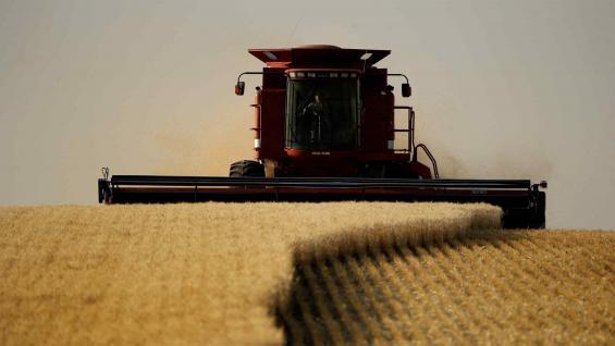 AVANCE. El trigo tiene un panorama muy favorable. Tras una cosecha récord, el precio ronda los 200 dólares por tonelada y entusiasma a los productores para la próxima campaña. (AP/Archivo)
