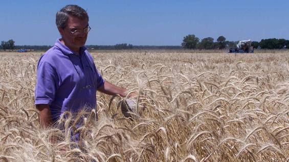 ESPECIALISTA. Jorge Fraschina, uno de los técnicos del Inta que más sabe de trigo en el país. (Foto de archivo - prensa Inta)