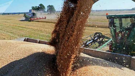 VOLUMEN. Algunos analistas aseguran que el cereal podría tener una cosecha récord.