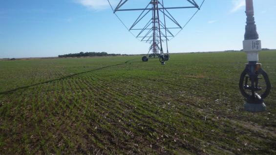 RIEGO. En el campo de 1.200 hectáreas, unas 476 son regadas a través de tres equipos de pivote. (LA VOZ)