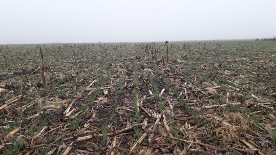 """ECUACIÓN. """"La combinación trigo-soja sobre maíz se está haciendo mucho más, sobre todo en campo propio"""", señaló José Luis Zorzín. (Gentileza Más Hectáreas)"""