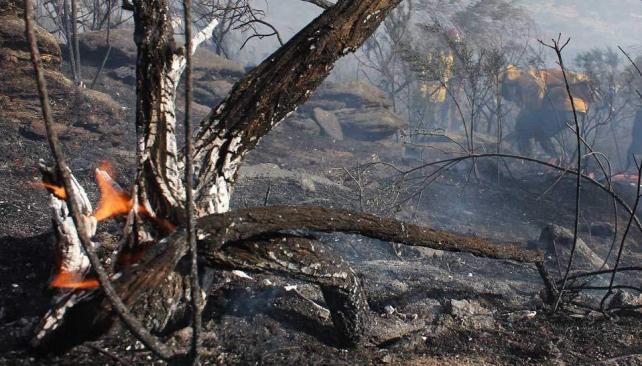 Flora. En un predio donde hubo un incendio hace nueve años, se registraron 19 especies de árboles, arbustos y hierbas. En una zona vecina sin quemar se detectaron 29 especies. El fuego afecta el dosel de los árboles (LaVoz).