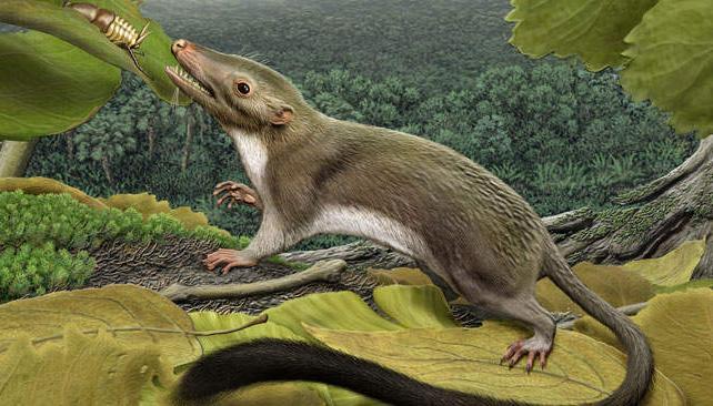 ANCESTRO. Vivió 60 millones de años atrás.